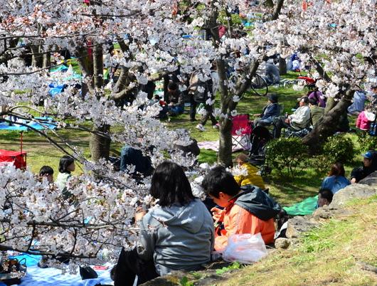 1-19.04.01 城内桜4分咲き.jpg