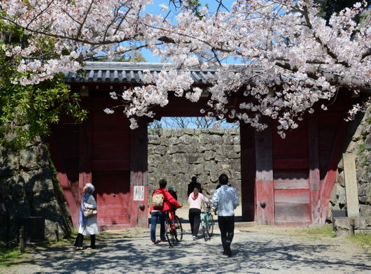 1-19.04.04 和歌山城公園の桜-1.jpg