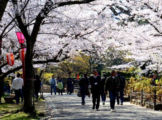 1-19.04.04 和歌山城公園の桜-4.jpg