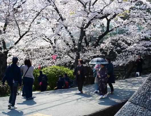 1-19.04.04 和歌山城公園の桜-6.jpg