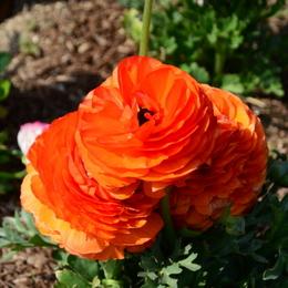 1-19.04.10 緑化センタ-花壇-13.jpg