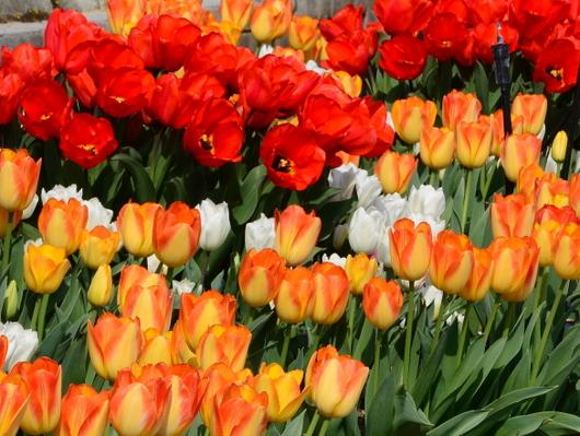 1-19.04.10 緑化センタ-花壇-4.jpg