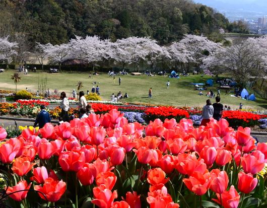 1-19.04.10 緑化センタ-花壇-7.jpg