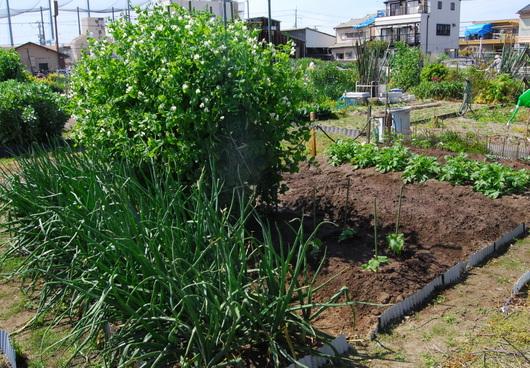 1-19.04.19 菜園-1.jpg