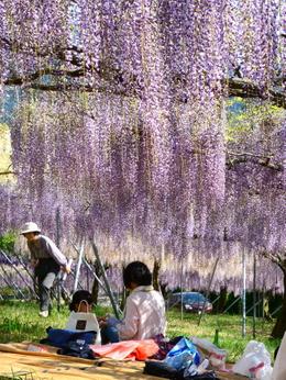 1-19.05.10 吉田ふじ園-5.jpg