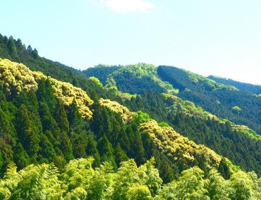 1-19.05.13 新緑の高野山-12.jpg