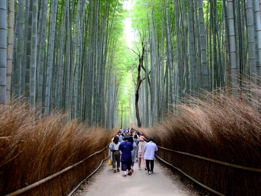 1-19.07.18 嵐山散策-9.jpg