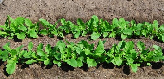 1-19.09.16 菜園-1.jpg