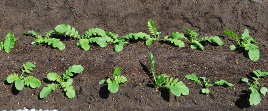 1-19.09.16 菜園-2.jpg