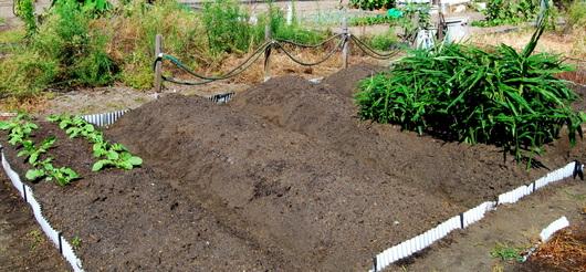 1-19.09.16 菜園-4.jpg