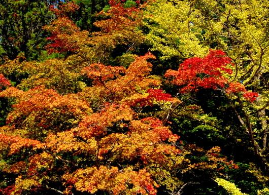 1-19.11.03 高野山の紅葉-1.5.jpg
