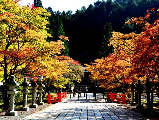 1-19.11.3 高野山の紅葉-1.jpg