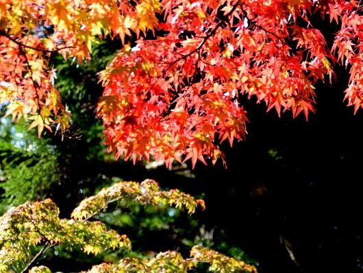 1-19.11.3 高野山の紅葉-3.jpg