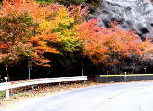 1-19.12.06 寒霞渓山頂に至る紅葉-2.jpg