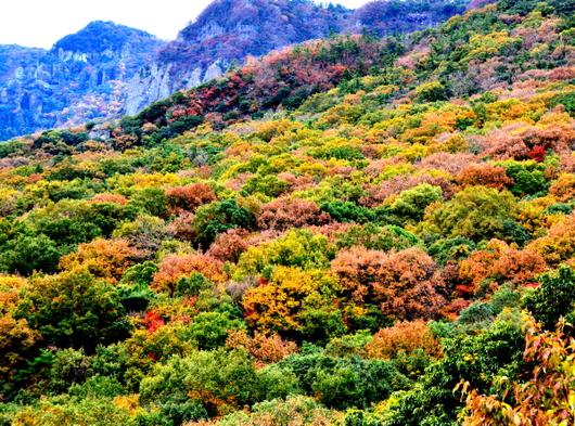 1-19.12.06 寒霞渓山頂の紅葉-3.jpg